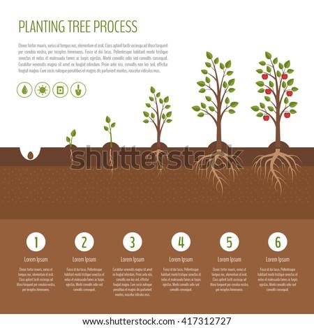 Planting Tree Process Infographic Apple Tree Stock Vector ...