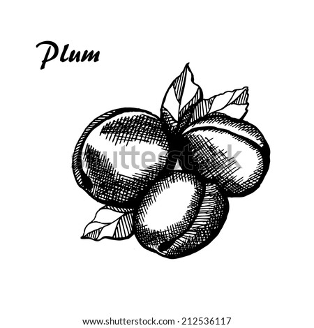 Plum, hand drawn plum with leaves