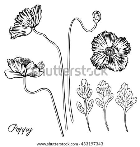 Vector Set 8 Vintage Drawing Flowers 465649163
