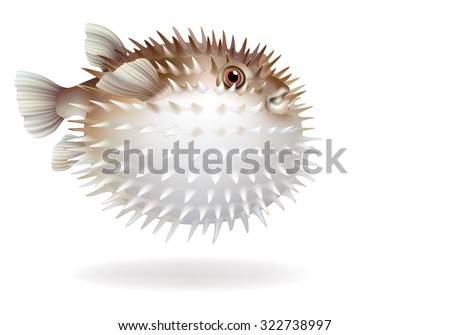 Puffer fish with needles on a white background [Tetraodontidae]