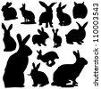 Rabbit - stock