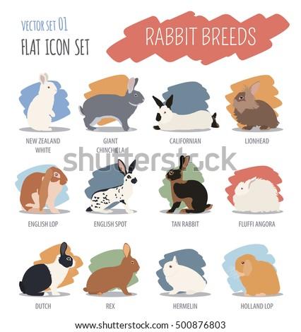 Rabbit lapin breed icon set flat stock vector 556120726 for Quelles sont les couleurs chaudes