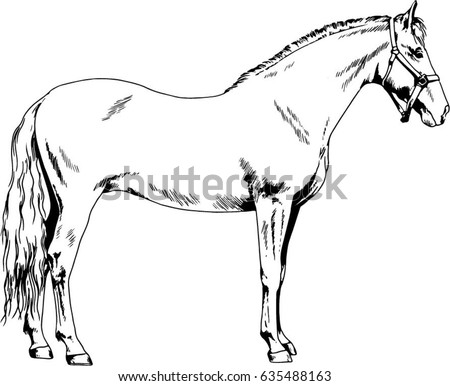 Dairy Cow Pencil Sketch Pinzgauer Breed Stock Illustration
