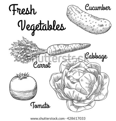 Fresh Meat Hand Drawn Collection Vector 258121106 on from a pig cuts of meat
