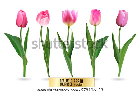 Realistic Vector Tulips Set Not Trace Stock Vector ...