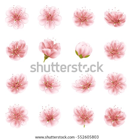 Sakura flowers icon set isolated. EPS 10 vector file included