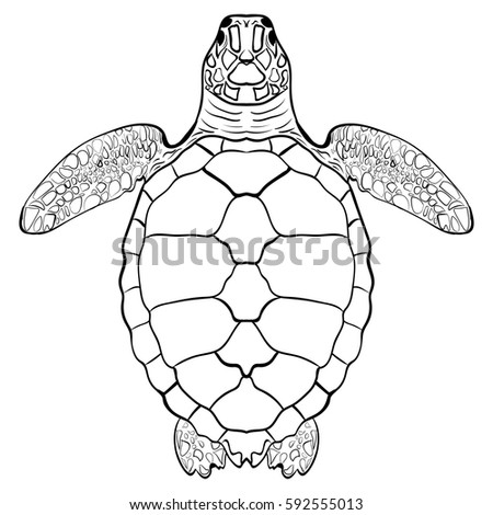 atlantic ridley coloring pages - photo#41