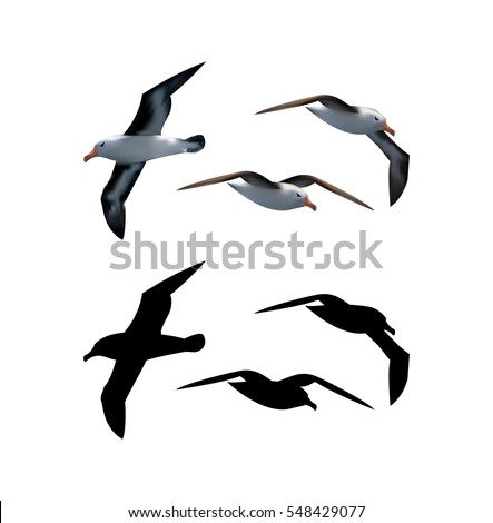 Seagull vector set with birds in different positions