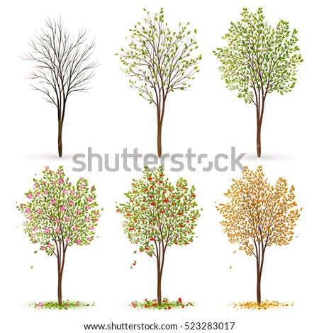 four seasons trees vector stock vector 522829894