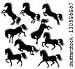 Set of a moving horse silhouettes isolated on white - stock vector