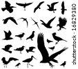 set of bird vector - stock vector