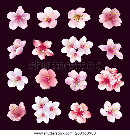 Set of different beautiful cherry tree flowers isolated on black background. Collection of pink, purple, white sakura blossom - japanese cherry tree.  Elements of floral spring design, vector.
