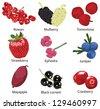 set of 9 different berries - stock vector