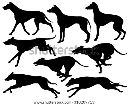 Set of 8 editable vector silhouettes of greyhound dogs running, standing and trotting