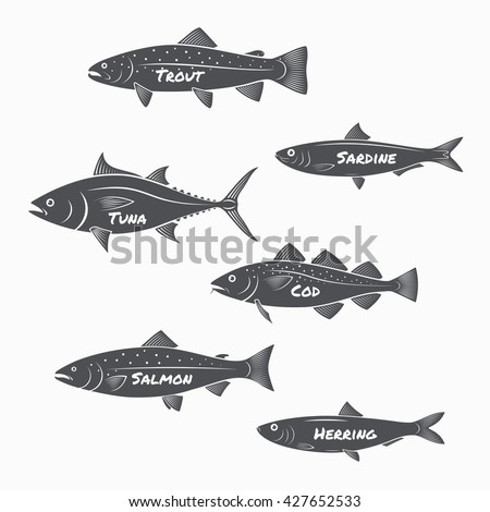 Bass Fish Logo also Bream moreover Stock Vector Largemouth Bass Is Catching A Bait And Jumping In Water Spray Layered Vector Illustration further caughtbytheriver also 2014 01 01 archive. on deep water salmon