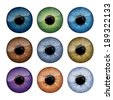 Set of human eyes iris isolated on white background. - stock vector
