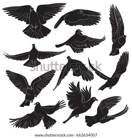 Eagle Silhouettes Showing Flying Standing Birds Stock ...
