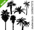 Set of palm tree silhouettes on white background, vector illustration - stock vector