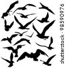 set of seagulls silhouettes - black flying birds on white - stock vector