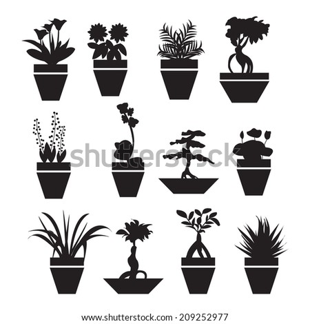 Image Result For Household Tropical Plants