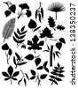 Set of twenty leaf silhouettes - stock vector