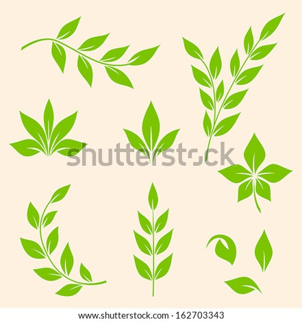 Set of vector green leaves and branches