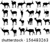 Set of 24 vector silhouettes of deer - stock vector