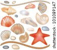 Set seashells and starfish isolated, vector illustration - stock vector