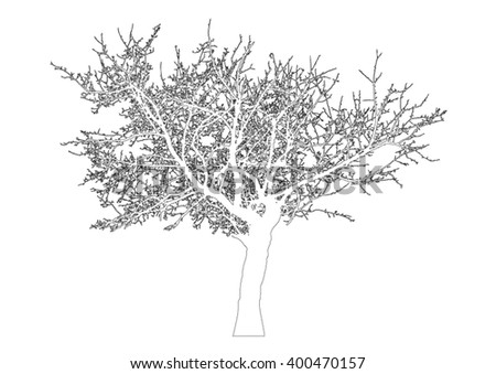 Silhouette of tree with bare branches - outlines - vector