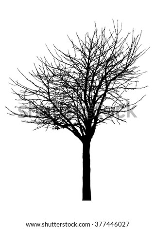 Silhouette of tree with bare branches - vector