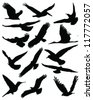 Silhouettes of birds in flight-vector - stock vector