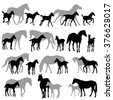 Silhouettes of horses - mares and foals