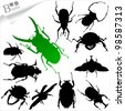 Silhouettes of insect - beetles - stock vector