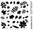 Silhouettes of tree leaves (elm, beech, ash, walnut, linden, birch, alder, aspen, willow, maple, elder, poplar, mountain ash, rowan, hawthorn, oak, acacia, chestnut, conker). Vector illustration. - stock vector