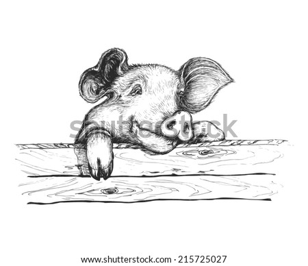 Sly pigSly pig looking over the fence. She has intelligent eyes and funny ears. Vector illustration.