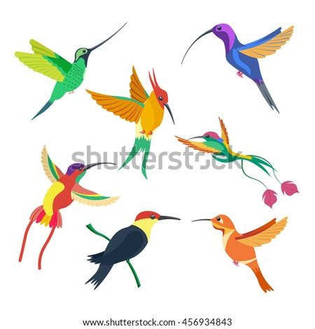 small bird hummingbird set vector illustration isolated on a white background