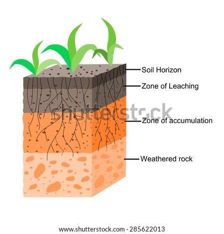 100 soil layers worksheet the dirt on soil science for Soil layers ks2
