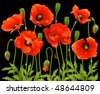 Spring flowers: poppy - stock vector