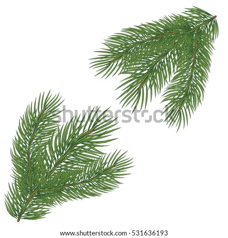Spruce branch. Vector illustration, isolated on white background. Suitable for creating Christmas cards, New Year presentations, banners
