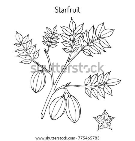 Vector Drawn Green Tea Flowers On 662665483