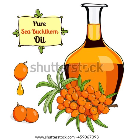 stock vector illustration of Sea Buckthorn berry oil for food and cosmetic label and banner. Bottle of berry oil for cosmetic and medicine . Sea Buckthorn oil isolated on white.