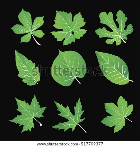 Summer and spring leaves set. green flat icon., vector