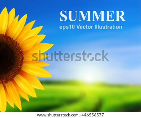 Summer landscape with sunflower, vector illustration.
