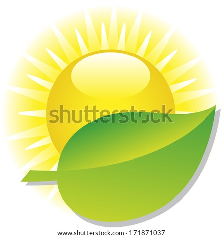 sun and green leaf
