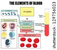 The elements of blood (useful for education in schools and clinics ) - vector illustration - stock vector