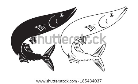 the figure shows the fish saury