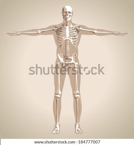 434 x 470 jpeg 24kBSkeleton