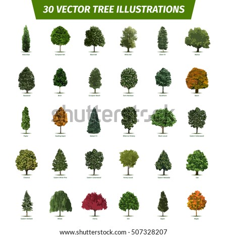 Different Tree Sorts Names Illustrations Tree Stock Vector ...