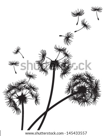 Three dandelions with seeds blowing in the wind
