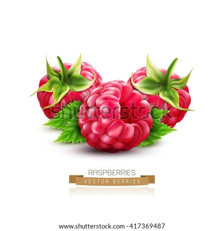 three vector berry raspberry with green leaves isolated on white background